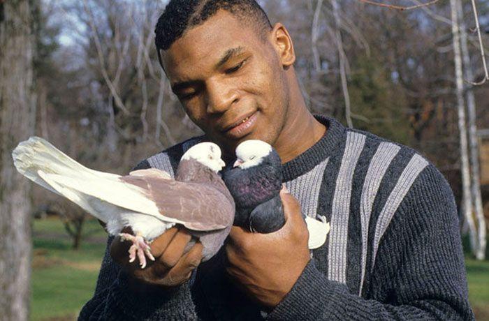 Майк Тайсон и голуби